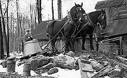 Harvested maple syrup being drawn by horses back to a boiling house near Chardon, Ohio.